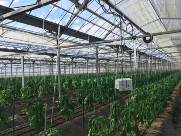 農業に本当に必要なものは、経験でもなければ土地でもないかもしれない。