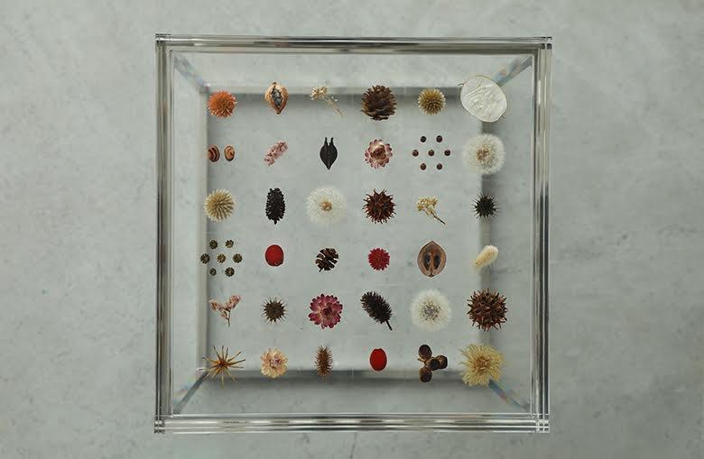 テーブルになった「植物の標本」。