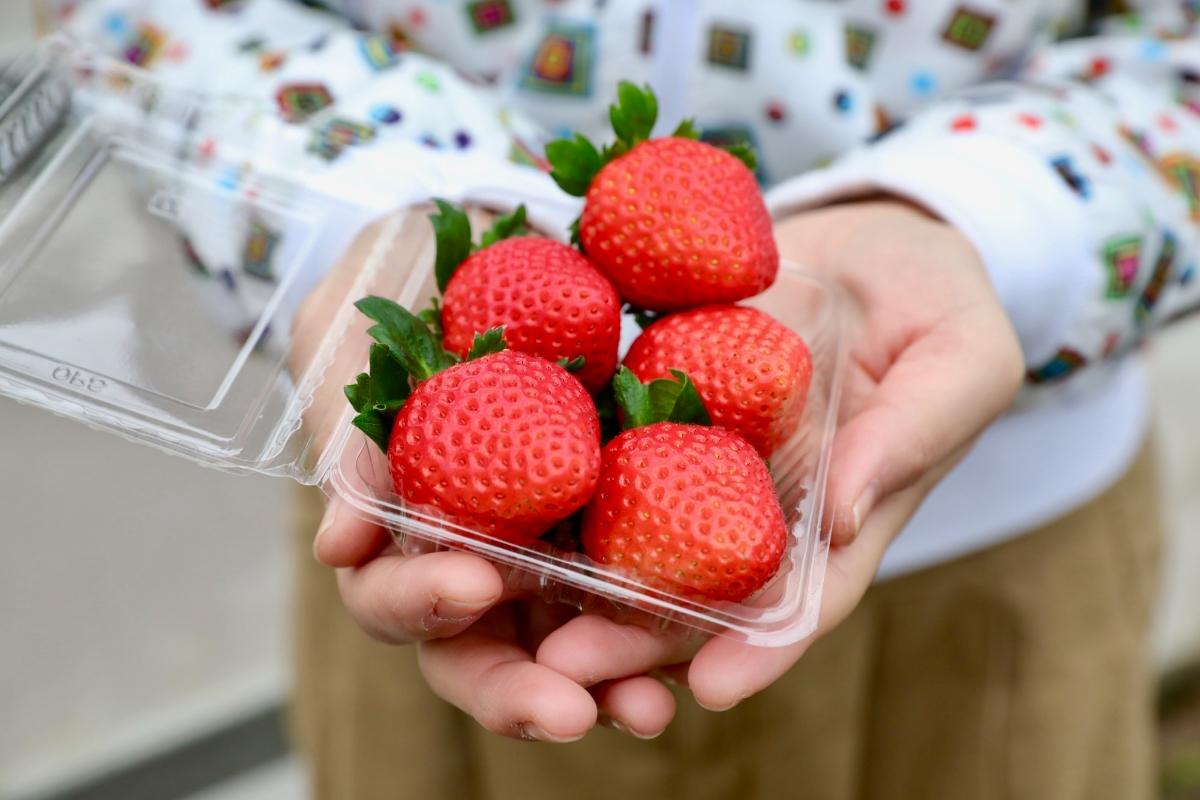 日本一若い「いちご農家」の、百姓プロジェクトがおもしろい。