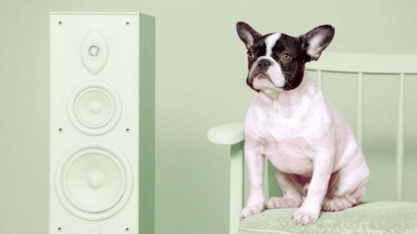 捨て犬の「好きな音楽」を明らかにしたら、どんどん里親が見つかった