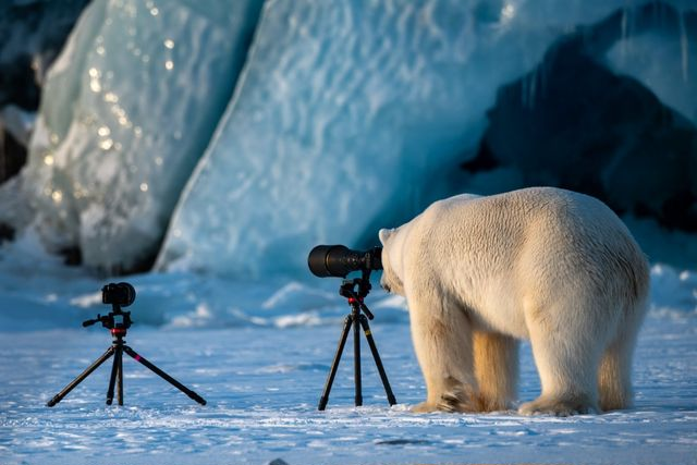 「Comedy Wildlife Photography Awards」シロクマ