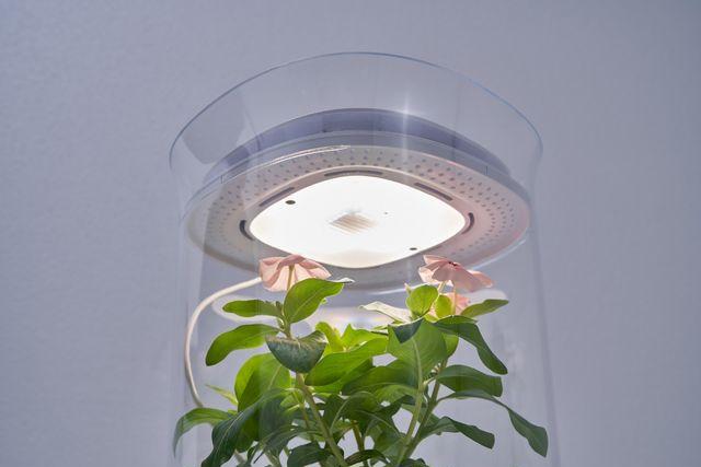 「Bloomengine」LED照明