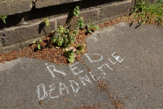 チョークで書かれた道端の雑草の名前