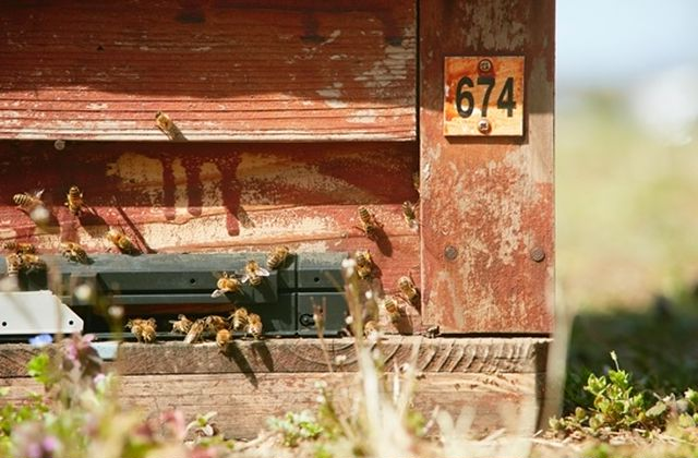 伊勢丹 新宿店の屋上にある巣箱